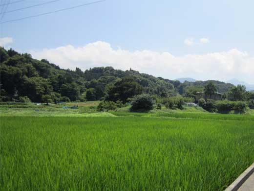 20110716れんきゅーしょにちぃ1