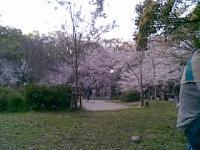 20100405(003).jpg