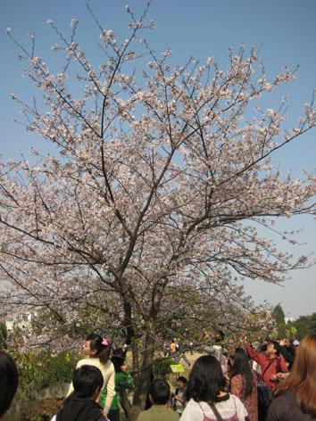 10年4月上海植物園1#
