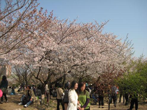 10年4月上海植物園2#
