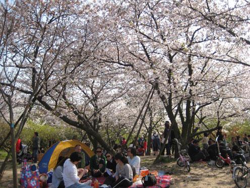 10年4月上海植物園3#