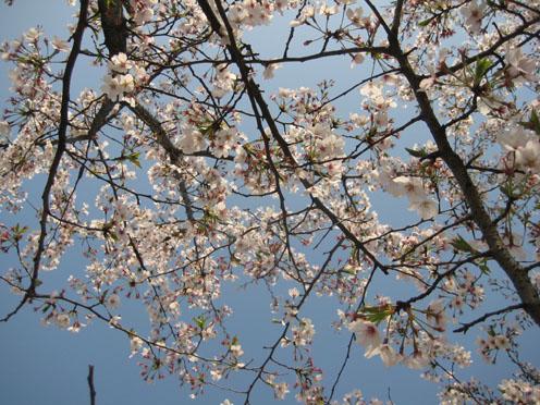10年4月上海植物園4#