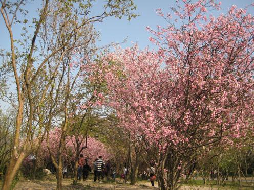 10年4月上海植物園5#