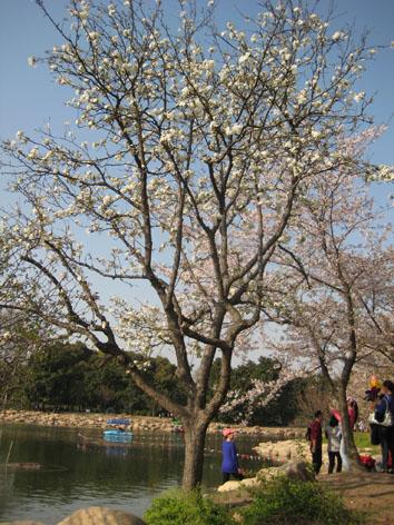 10年4月上海植物園6#