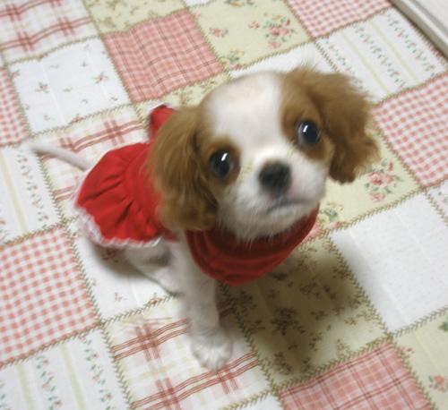 赤いお洋服