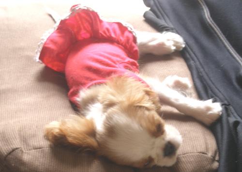 赤いお洋服2