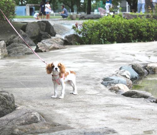 華ちゃん散歩2