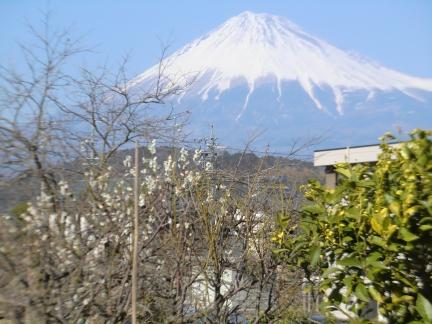 富士山3.2裏庭から