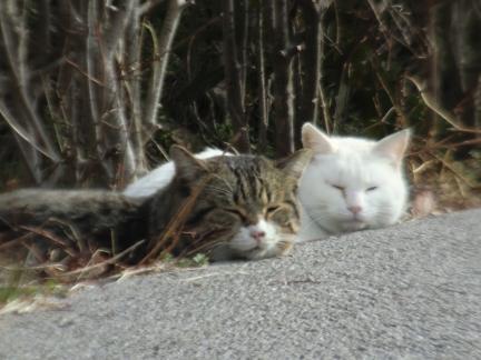 2月7日猫にゃんにゃん