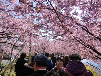 25年桜のトンネル15