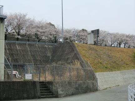 2013035.jpg