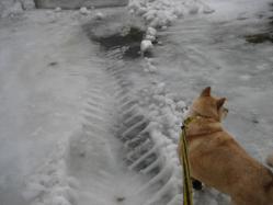 除雪車が通った跡
