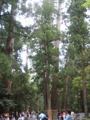 歴史を感じる木の高さ・・・(!o!)
