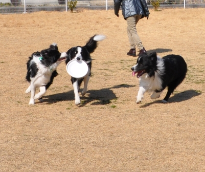 仲良し3犬男子