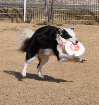 マシャぴょん マシャちゃんはジャンプが上手いんです。
