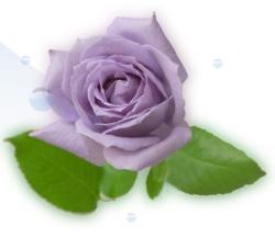 rose2_20110622084601.jpg