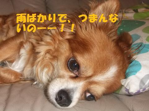 001_convert_20100709162101.jpg