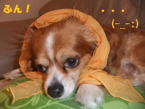 003_convert_20100709162003.jpg