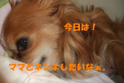 004_convert_20100512191755.jpg