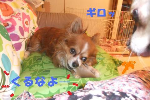 005_convert_20100504074255.jpg