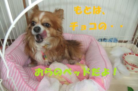 005_convert_20100528133557.jpg