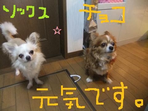 005_convert_20100709162434.jpg