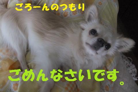 006_convert_20100523183635.jpg