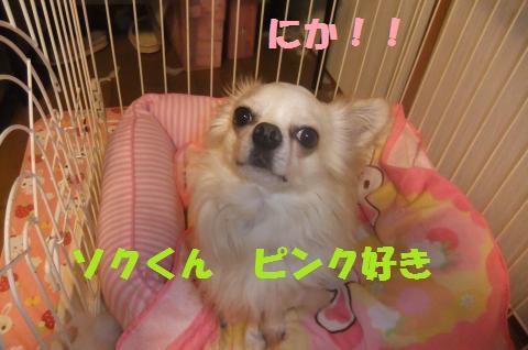 006_convert_20100526004822.jpg
