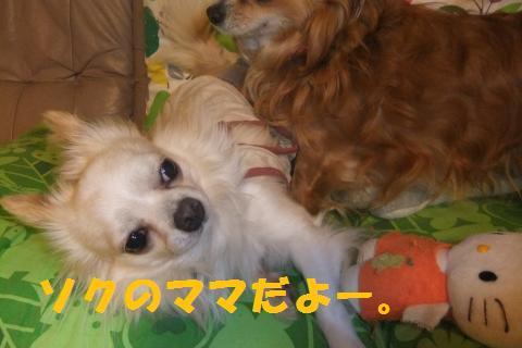 007_convert_20100513223552.jpg