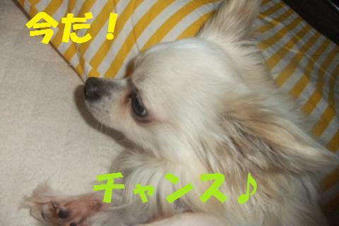 007_convert_20100523183800.jpg