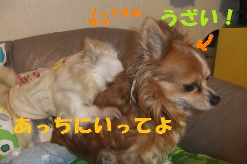 008_convert_20100513223653.jpg