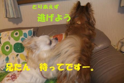 009_convert_20100513223748.jpg
