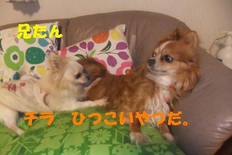 010_convert_20100513223841.jpg