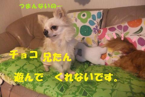 011_convert_20100513224029.jpg