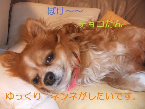033_convert_20100503072240.jpg