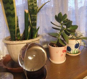 観葉植物と・・・