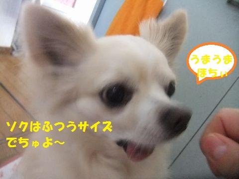 ちょうだ~いのソク
