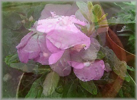 お花の加工