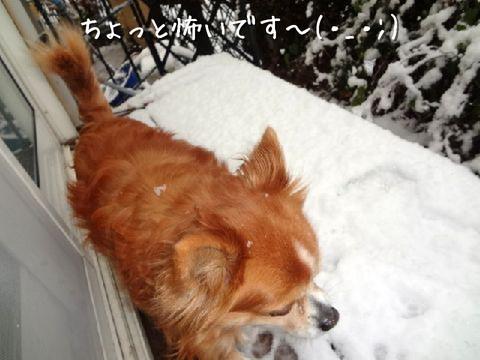 雪が怖いチョコ