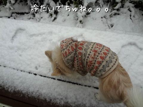 初めての雪にソク クンクン