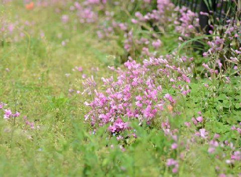季節の花①