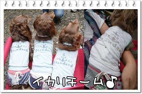 cats_20110828110440.jpg