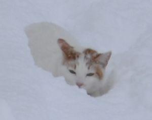 010にゃんた雪