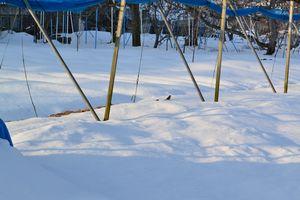006雪の畑1