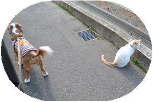 001散歩