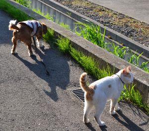 001散歩1
