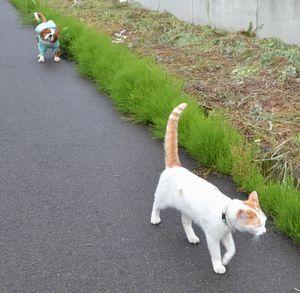 003散歩