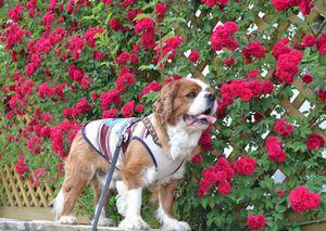 011つる薔薇