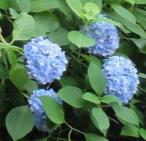 006名月院ブルー