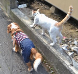 008散歩
